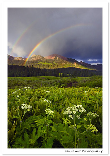 Gothic Rainbow | by Ian Plant Nature Photography