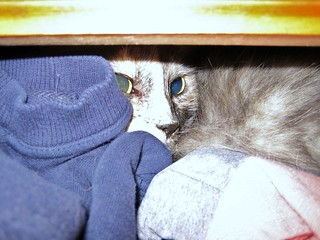 Lorax in my dresser drawer | by TXMagpie