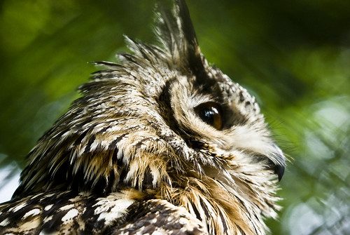 "Owl Bokeh | by ""Mike Foster"""