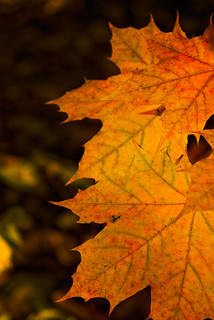 Fall's in the Air? | by RichGreenePhotography.com