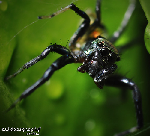 Outdoorgraphy™ : Jumper on Lime #1 | by Sir Mart Outdoorgraphy™
