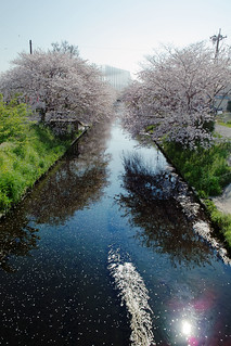 sakura_2009 | by guen-k
