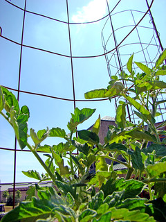 tomato cage w/ university union | by uwgb admissions