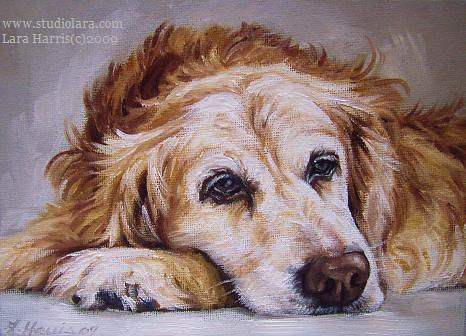Quot Sammy Quot Golden Retriever Painting In Oil By Lara Harris