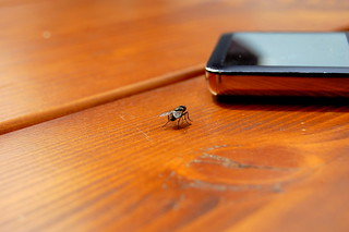 fly versus ipod | by surfingstarfish