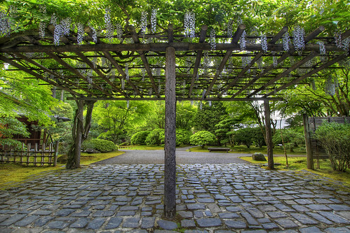 Wisteria Blooming on Pergola at Portland Japanese Garden 2 - HDR | by David Gn Photography