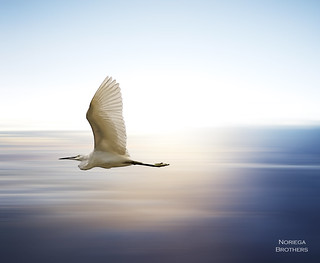 At The Speed Of Light | by Tomasito.!