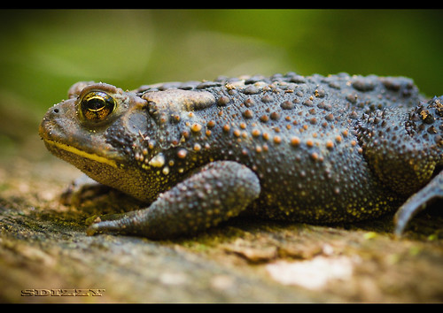 Ribbit Ribbit | by scottwsd