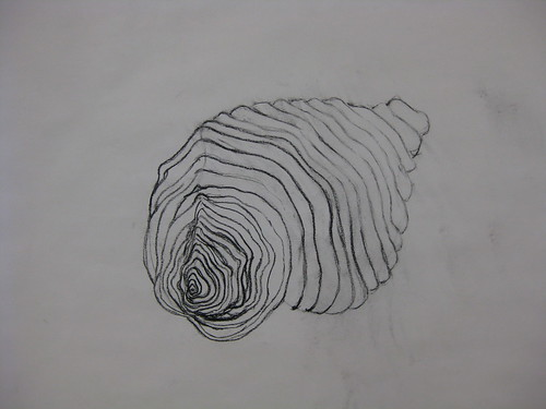 Contour Line Drawing Shell : Shell cross contour drawing david