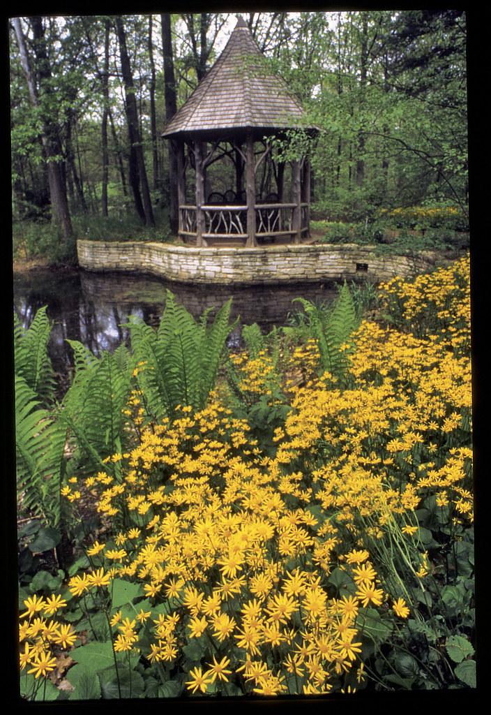 ... Shaw Nature Reserve   Whitmire Wildflower Garden | By Missouri  Botanical Garden