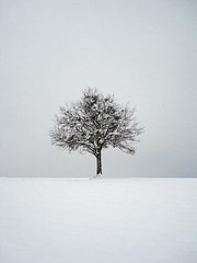 lonely tree in the snow | by sant.o