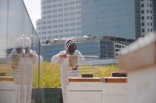 Rooftop Beehives, Vancouver Convention Centre | by vancouverconvention