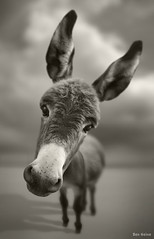 Hey There | by Ben Heine