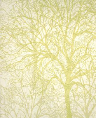 Modern wallpaper tree print by graham brown by sarahkaron