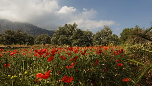 Wild Flowers, Lapta, North Cyprus | by Lyndon Photography