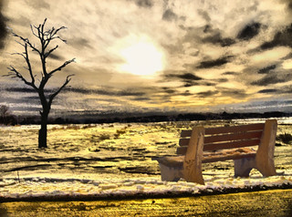 Cold Flat Marsh with Bench & Tree | by Rusty Russ