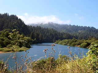 Russian River View | by Ingrid Taylar