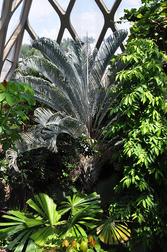 Boettcher Memorial Tropical Conservatory 3 | by A Tidewater Gardener