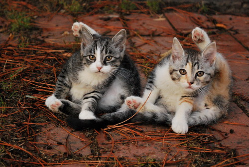 Mezzapiaggia Kitties | by goingslowly