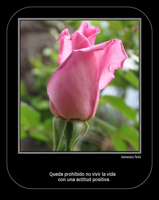 Miro la vida de color rosa...aunque a veces hay unas espin…   Flickr