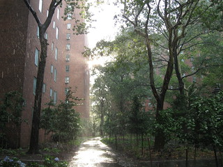 Summer Sun Shower in Stuyvesant Town | by Marianne O'Leary