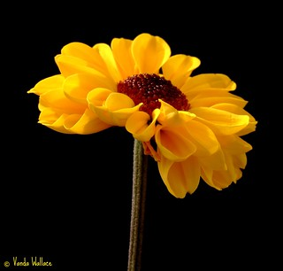 Sunshine | by Vanda's Pictures