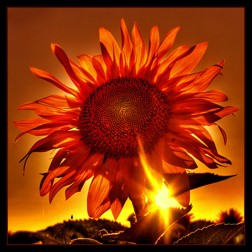 Mother of Sun | by Kugarth