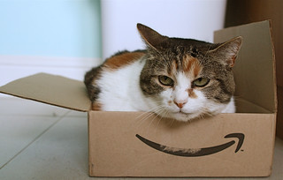 Amazon cat | by protohiro