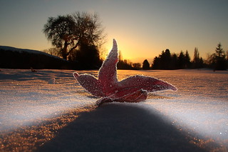 Leaf on a Frosty Morning | by Ryan S B