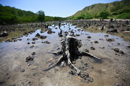 Mangroves Cut in Hera, Timor-Leste | by United Nations Photo