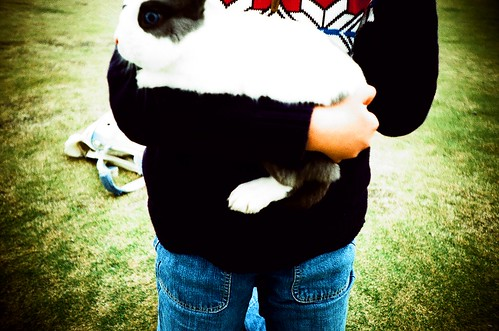 rabbit!!!!!!!!! I used to have one, named 兔兔 | by flyingsofty