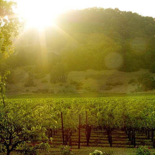 Sunset in Napa | by K.Hurley