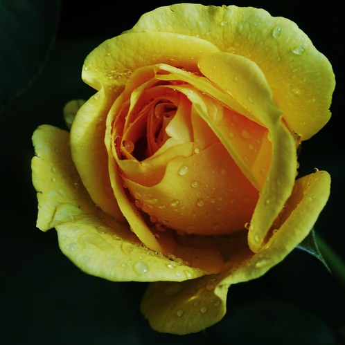 Yellow | by Renee Rendler-Kaplan