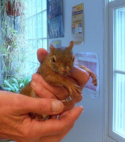 Rescued Baby Squirrel                             (EXPLORE 8/24) | by nancylynnfree