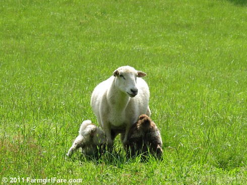 Happy Mother's Day! | by Farmgirl Susan