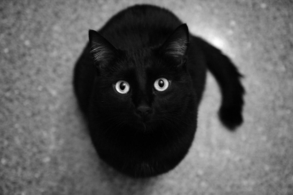 The Black Cat Nicoletta Occella Flickr