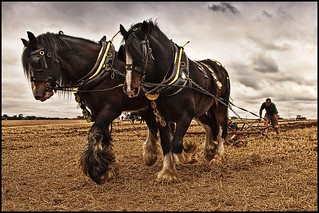 Horse Power | by Smudge 9000