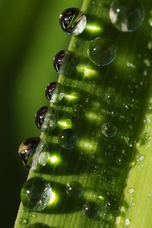 Droplets the First | by San Diego Knipser