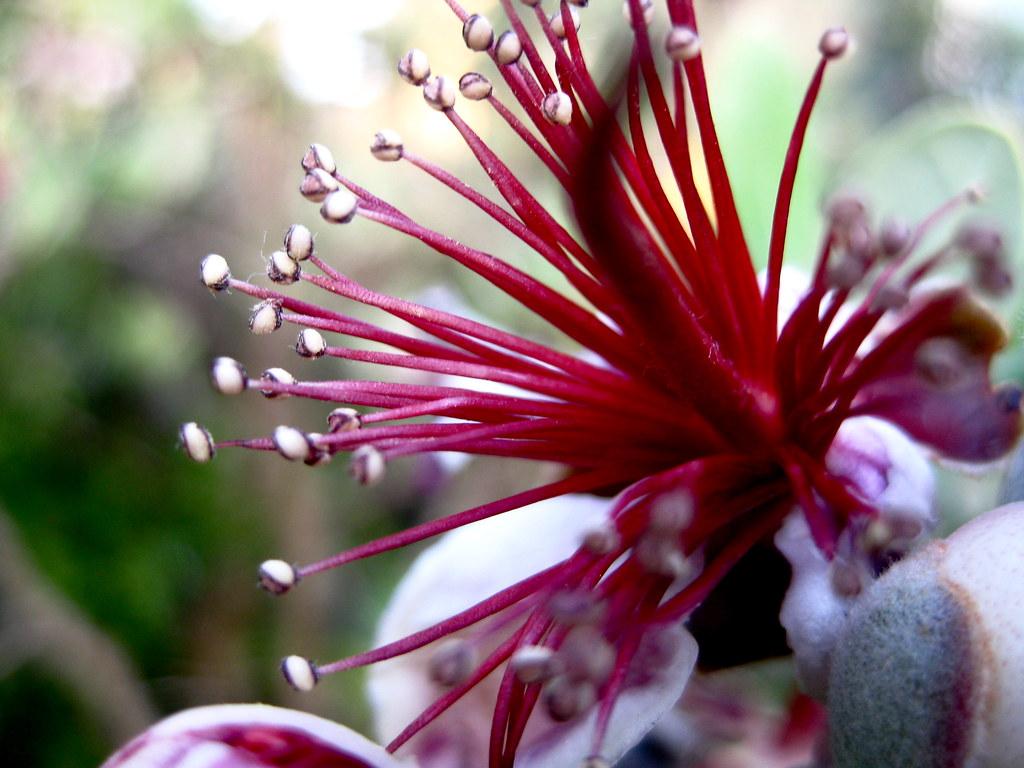 Dragon Flower Neusha Afkami Flickr