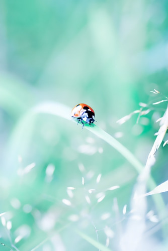No. 200 ~ Miss Ladybug | by Michaela Rother
