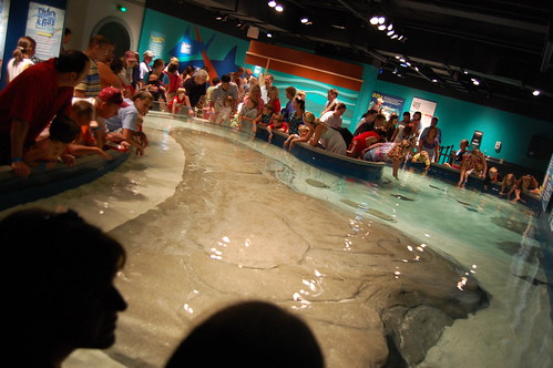 The Shark & Ray Touch Tank | by McWane Science Center