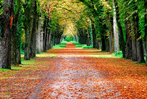 Nature in autumn colours (Loire Valley, central France) | by natureloving