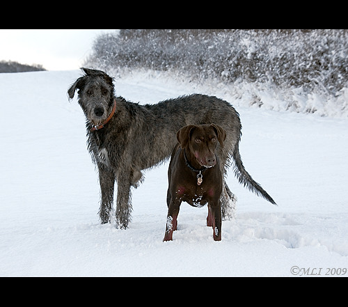 Snow Buddies | by Mia Lewis Images