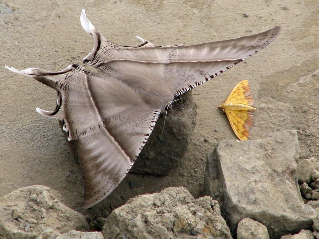 moth conference david and goliath india nagaland kisama u2026 flickr