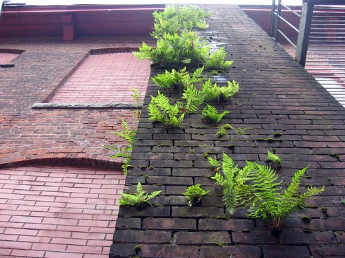 Ferns growing on brick smokestack | by H.C. Williams