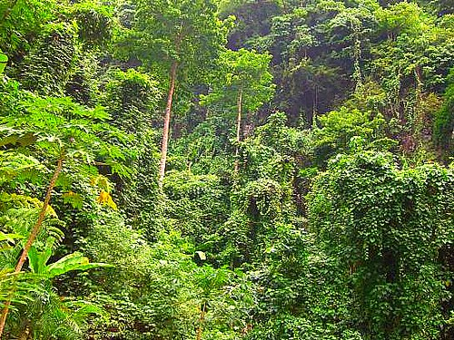 Virgin Forest in Camiguin Island | The island-province of Ca… | Flickr