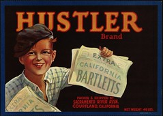 Hustler Brand: California bartletts, packed & shipped by Sacramento River Assn., Courtland, California | by Boston Public Library