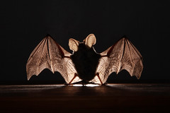 mouse with wings | by Floating Lantern