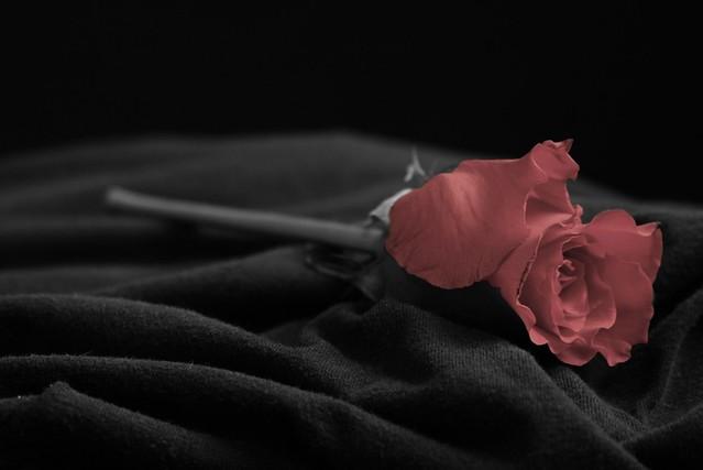 Como Sanar una Herida de Amor