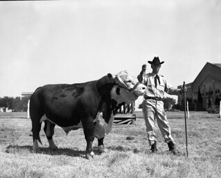 Diamond Anxiety Bull | by Cushing Memorial Library and Archives, Texas A&M
